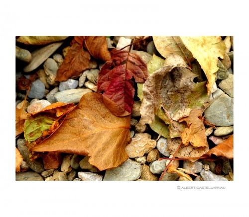Ramón-otoño